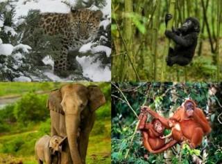 Bảo vệ động vật hoang dã: Trách nhiệm của mỗi người