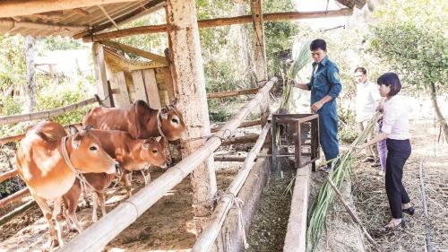 Dấu ấn tín dụng chính sách ở xứ Nghệ