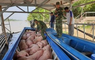 TP.HCM: Tăng cường kiểm soát buôn lậu lợn và sản phẩm từ lợn qua biên giới, cửa khẩu