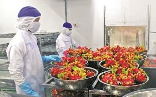 Tận dụng cơ hội từ EVFTA: Nội lực là điểm tựa chính