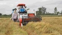 Gỡ khó tiêu thụ lúa gạo cho Đồng bằng sông Cửu Long