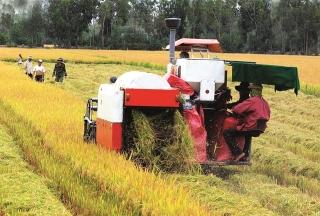 Sẵn sàng vốn cho thu mua lúa gạo