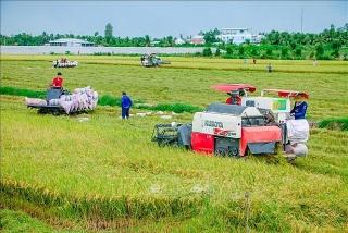 Tháo gỡ khó khăn cho tiêu thụ lúa gạo