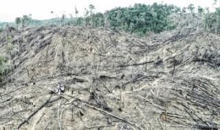 Nạn phá rừng lấy đất sản xuất