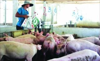 TP.HCM: Chủ động đảm bảo nguồn cung thịt lợn