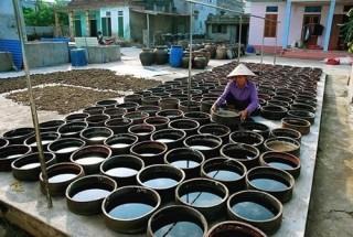 Tôn vinh làng nghề nước mắm Nam Ô