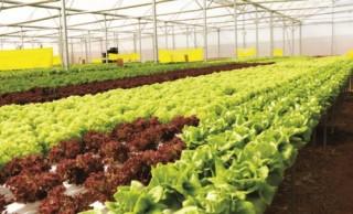 Để thúc đẩy nông nghiệp sạch
