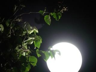Dưới ánh trăng thu