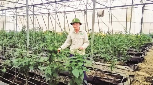 Đẩy mạnh phát triển nông nghiệp hữu cơ