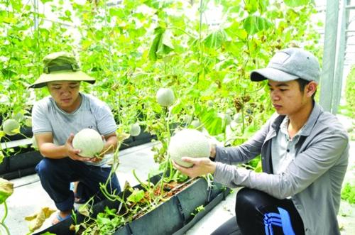 Xuất khẩu nông sản sang Trung Quốc: Khó khăn và giải pháp