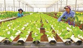 TP.HCM: Phát triển thành trung tâm cung ứng giống nông nghiệp