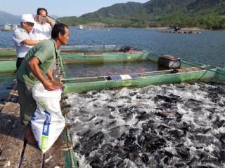 Phát triển nghề nuôi thủy sản đại dương