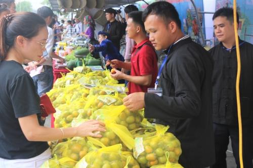 Tuần lễ giới thiệu Hồng không hạt tỉnh Bắc Kạn tại Hà Nội