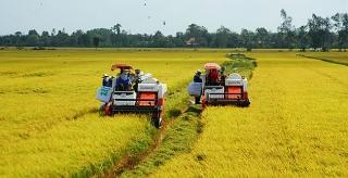Tăng hạn mức cho vay lúa gạo
