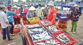Bình Thuận: Tắc đầu ra, hải sản rớt giá mạnh