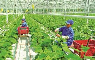 Hướng tới một nền nông nghiệp xanh, bền vững