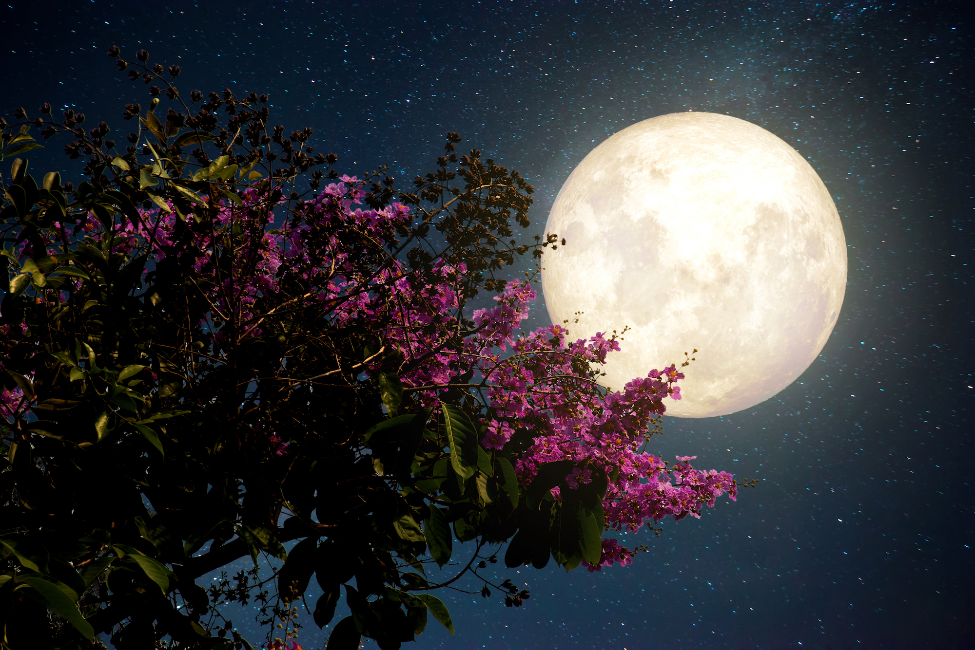 Thơ ấu dưới trăng quê