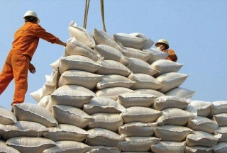 Xuất khẩu gạo đạt hơn 2 tỷ USD trong 8 tháng