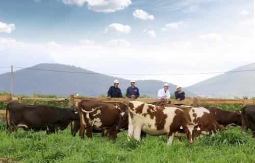 Vinamilk sắp khánh thành trang trại bò sữa Organic chuẩn châu Âu