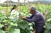 Tín dụng chính sách nơi vùng biên Lộc Bình