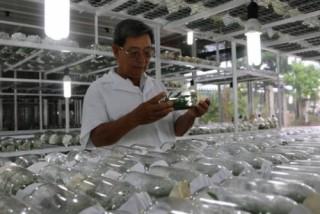 TP.HCM: Giá trị sản xuất nông nghiệp đạt hơn 8.500 tỷ đồng