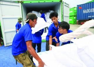 Sẵn sàng tiếp vốn cho xuất khẩu gạo