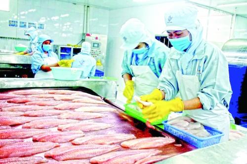 Cơ hội mở rộng thị phần cá tra vào Mỹ
