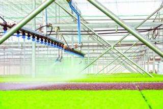 Phải cơ giới hóa cho sản xuất nông sản