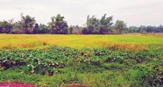 Lãng phí tài nguyên đất vì dự án treo