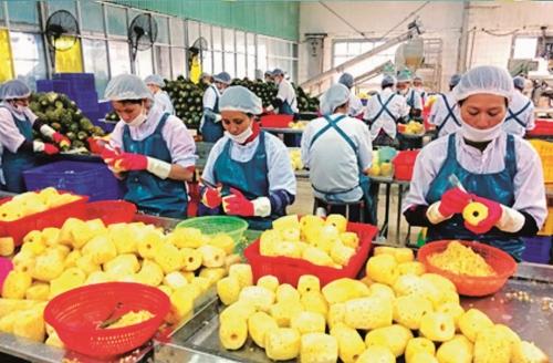 Liên kết chuỗi nông sản: Doanh nghiệp giữ vai trò chủ đạo