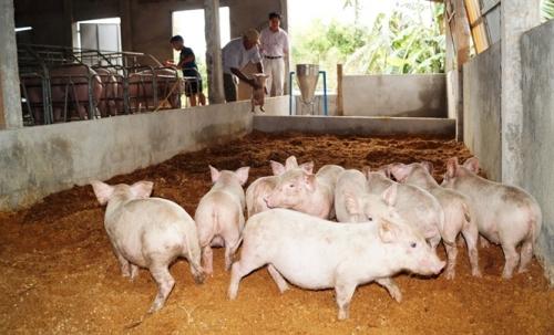 Đẩy mạnh chăn nuôi sinh học