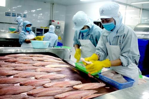 Doanh nghiệp cá tra chuyển hướng xuất khẩu