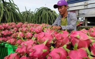 Nhiều giải pháp hỗ trợ xuất khẩu nông sản, trái cây sang thị trường Trung Quốc