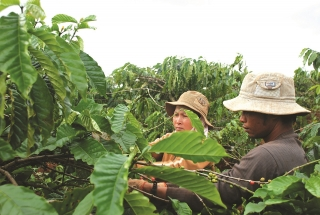 Chủ động phát triển nông nghiệp theo chuỗi