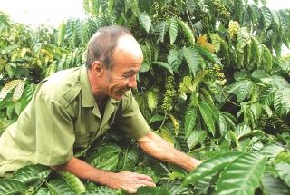 Tăng giá trị cà phê Việt trên thị trường