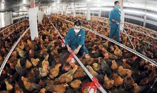 Đẩy mạnh chăn nuôi an toàn sinh học