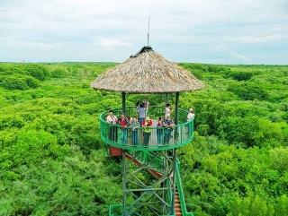Saigontourist tổ chức tour du lịch đường sông bằng tàu cao tốc Greenlines đến với vùng xanh Cần Giờ