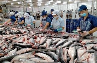 Tăng cường các giải pháp ổn định chuỗi tiêu thụ cá tra