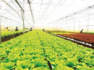 Cơ hội tăng tín dụng nông nghiệp công nghệ cao