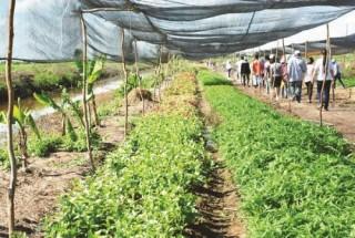 Thu hút đầu tư vào nông nghiệp: Doanh nghiệp còn hoài nghi