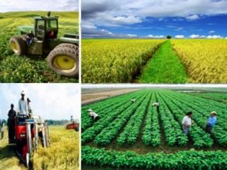 Agribank triển khai gói 50.000 tỷ đồng ưu đãi phục vụ nông nghiệp sạch