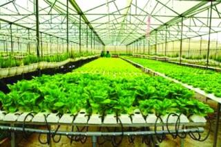 Agribank chủ động đồng hành cùng nông nghiệp 4.0
