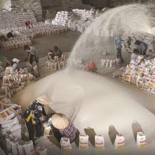 Lo xuất khẩu gạo tranh bán