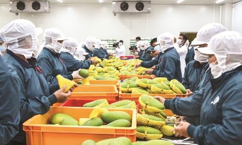 Tận dụng EVFTA, thúc đẩy rau quả vào chuỗi giá trị toàn cầu