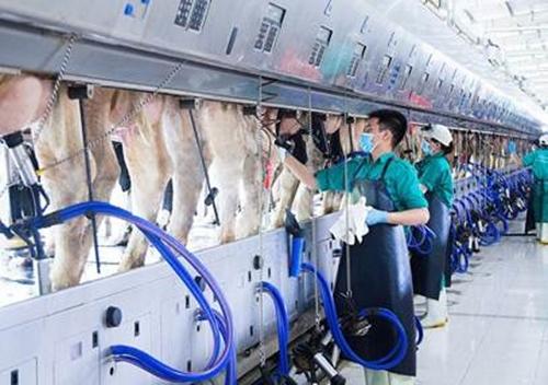 Phát triển ngành chăn nuôi theo hướng công nghiệp hóa