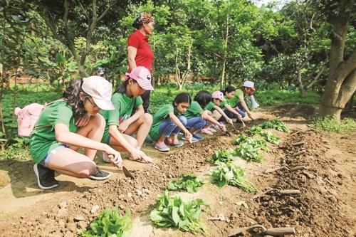 Du lịch nông nghiệp, sinh thái ở Hà Nội: Cần thêm những trải nghiệm