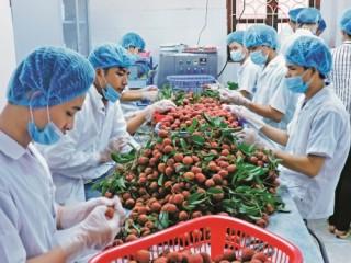 Sáng tạo để nâng cao giá trị cho nông sản