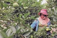 Phát triển nhân lực nông nghiệp trong CMCN 4.0