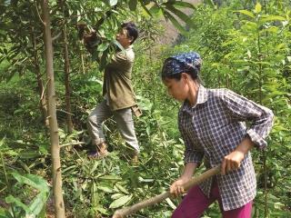 Chú trọng phát triển dịch vụ môi trường rừng