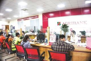 Agribank chi nhánh Hà Giang: Đẩy mạnh hỗ trợ khách hàng chịu ảnh hưởng của Covid-19